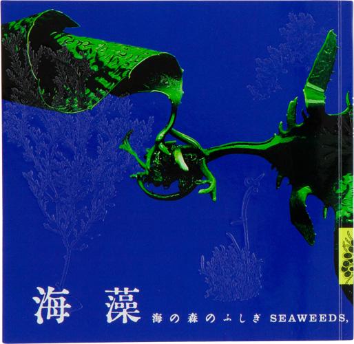 海藻 海の森のふしぎ